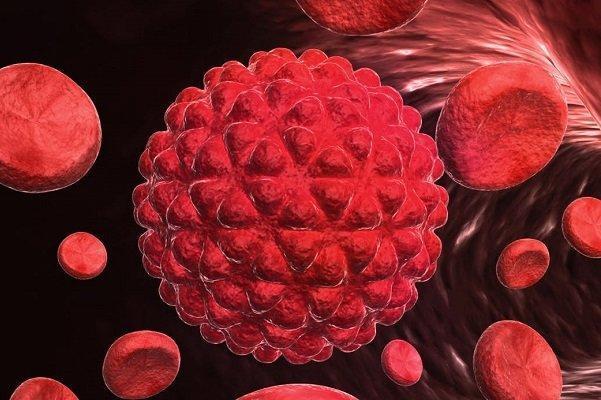 آنتی بادی جدید با کاربرد تشخیص سرطان فراوری بومی شد